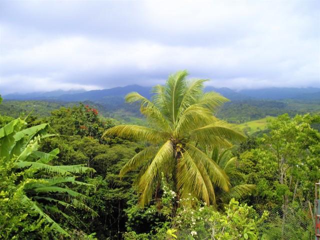 Balade en forêt tropicale 1 -© Thia
