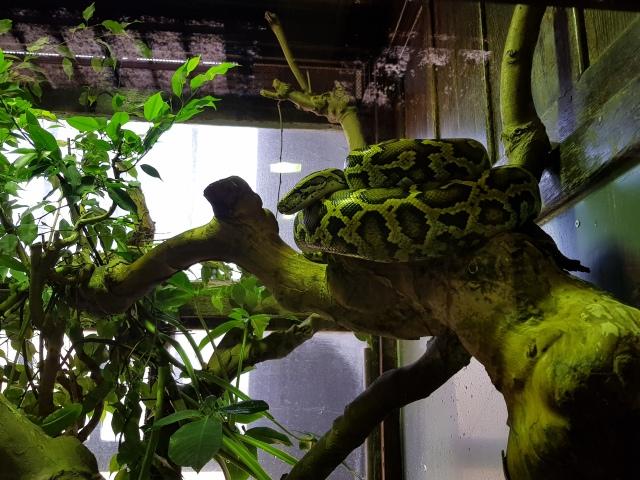 Python - © Thia