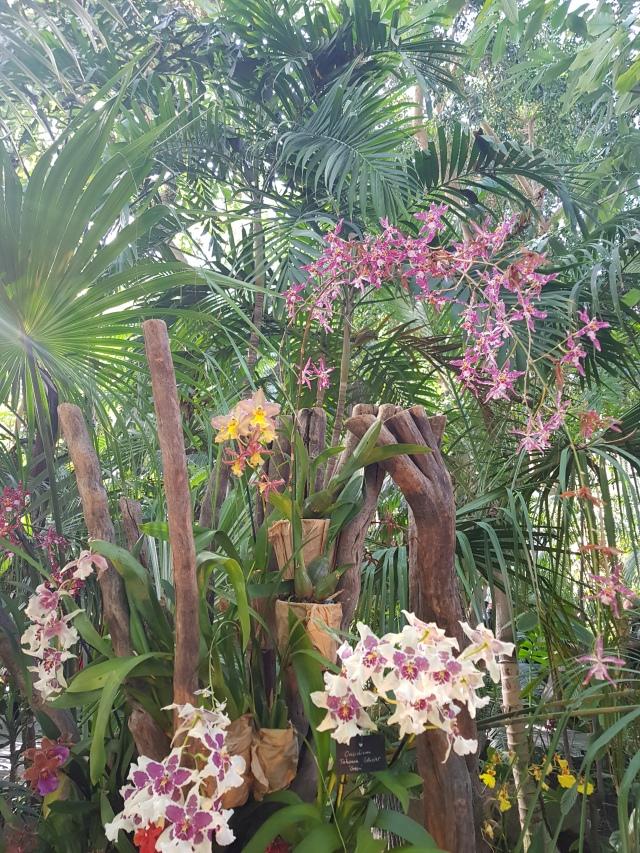 Serre tropicale 5 - © Thia