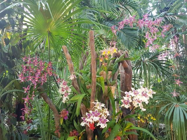 Serre tropicale 6 - © Thia